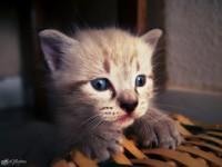cute_furball_by_ilneofita-d7qhepj